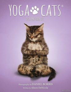 Yoga Cats Deck Book Set Йога Кошек